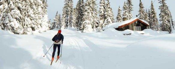 Прокат беговых лыж